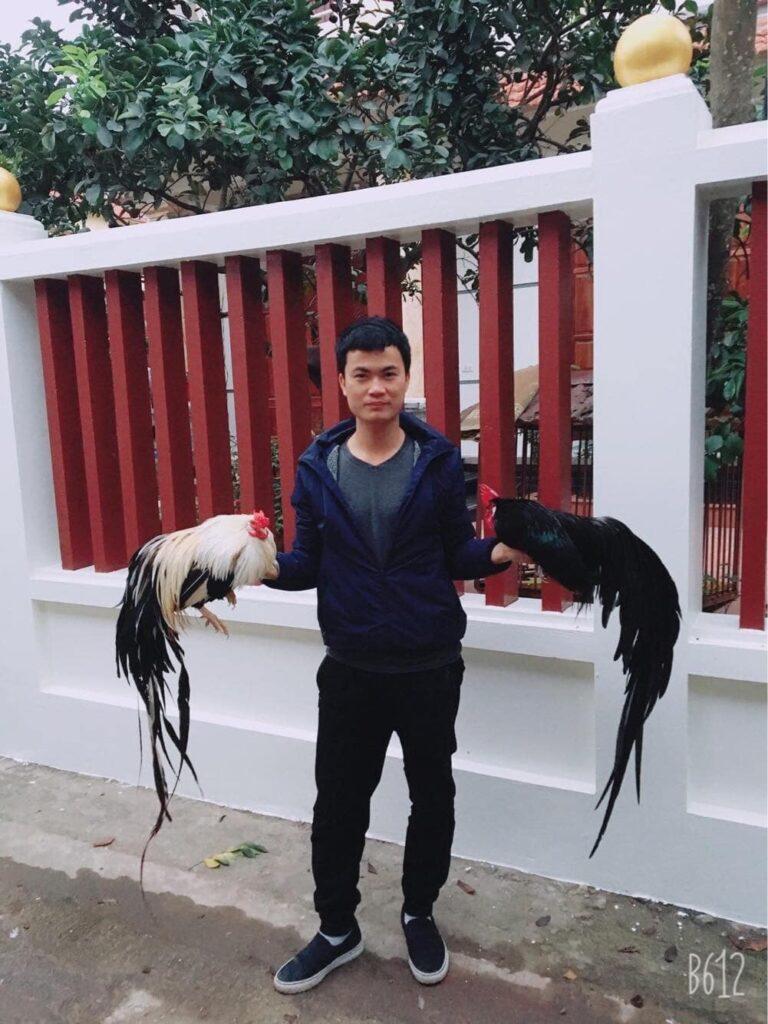 Trại gà tre Tân Châu tại bắc ninh Giới thiệu 8