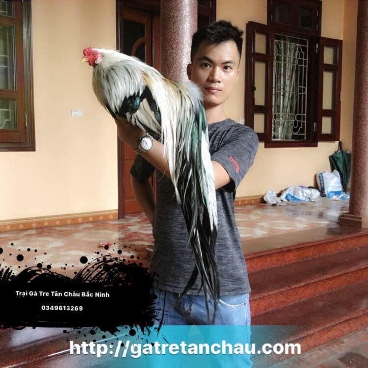Trại gà tre Tân Châu tại bắc ninh Giới thiệu 6