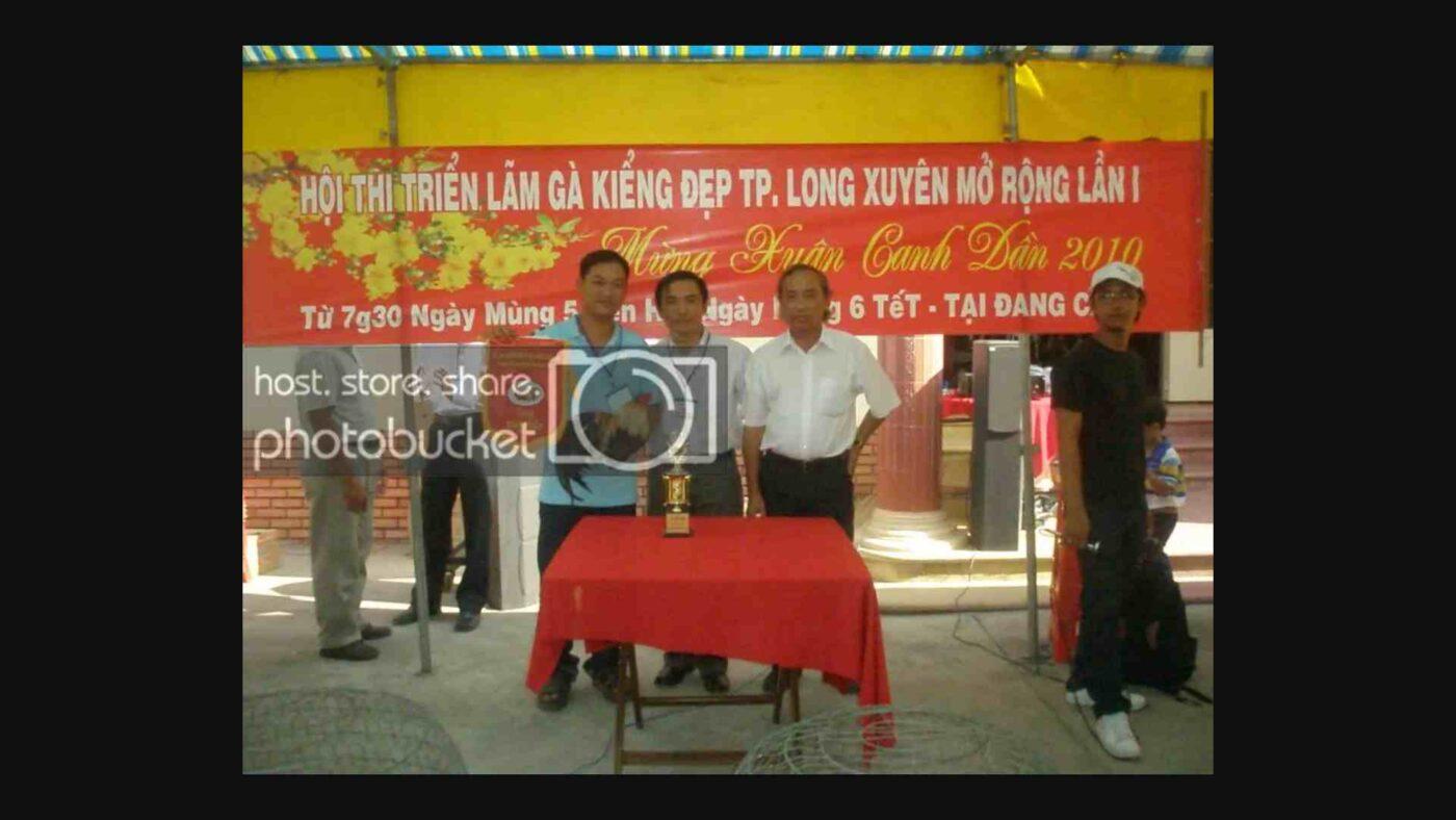 Phong Trào Gà Tre Kiểng Việt Nam 4